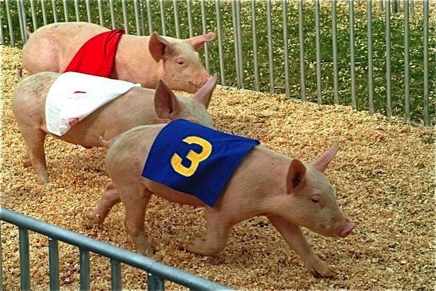 Pig Race 8 hedricks promotions_g19i6